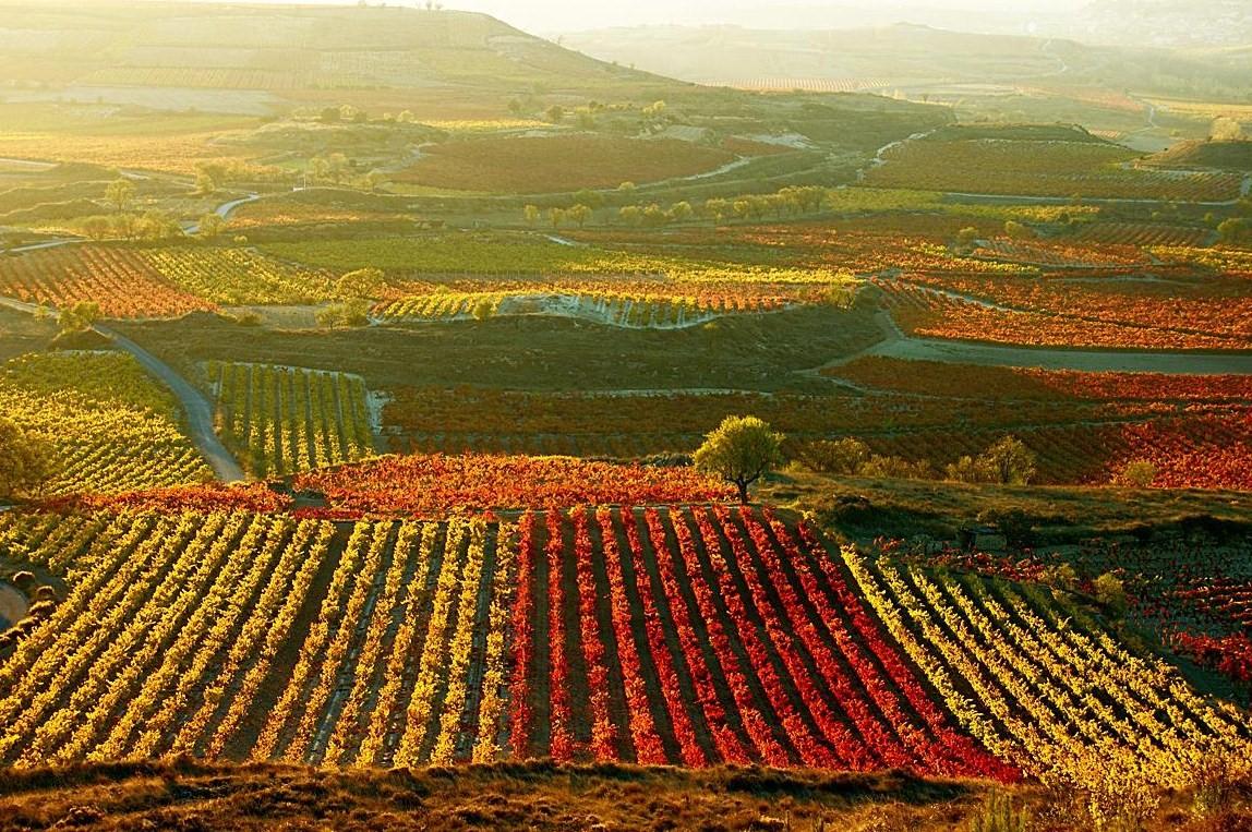 vinos-chilenos